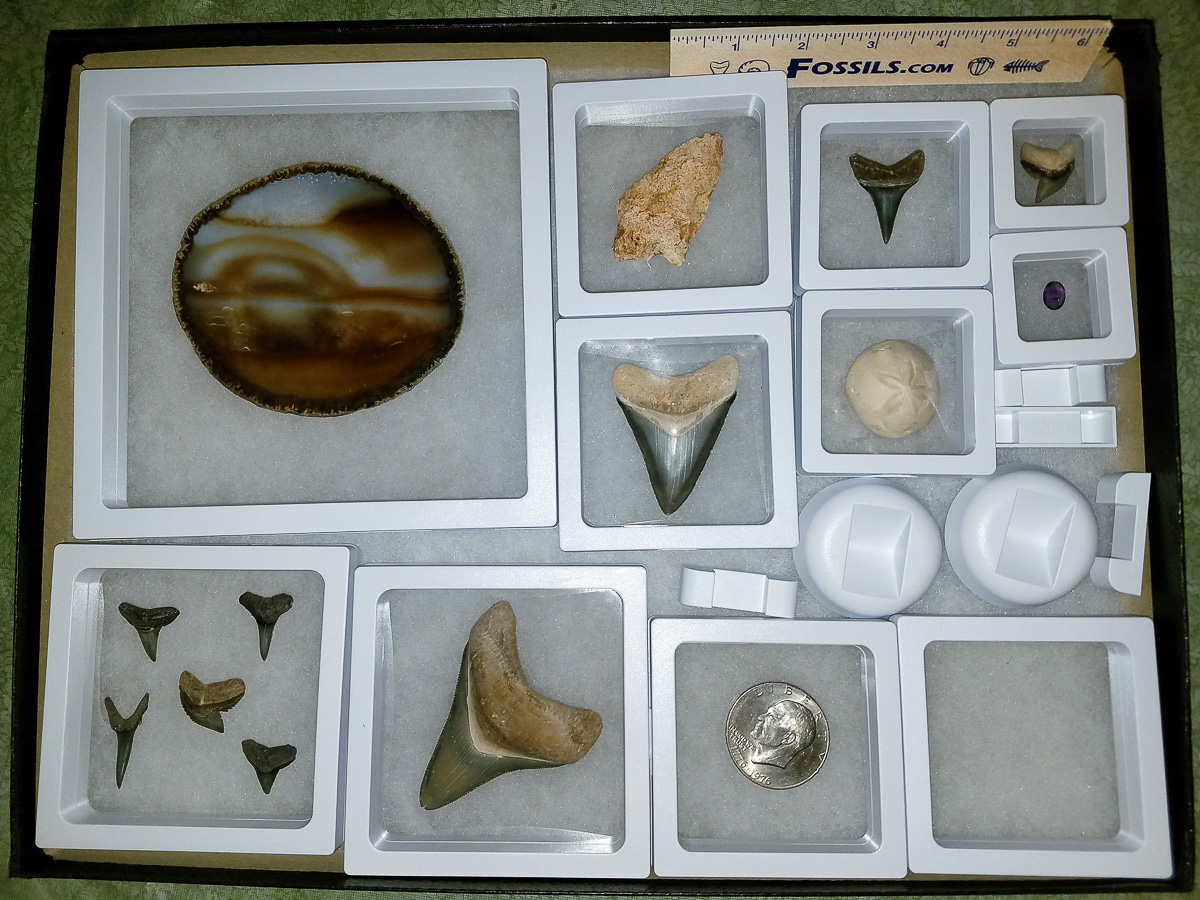3D Floating Frame 2-Sided Display Cases and Fossils For Sale